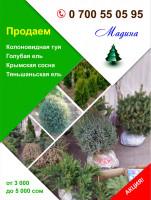 Продаю елки
