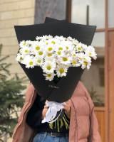 Хризантемы ромашки Цветы Ош