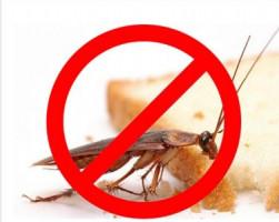 Дезинфекция Бишкек Уничтожения тараканов клопов и других вредителей