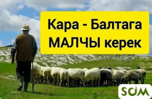 ТЕЗ АРАДА КАРА-БАЛТАГА УЙ-БУЛОЛУУ ЖЕ БОЙ МАЛЧЫ КЕРЕК