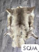 Продаю: шкуру северного оленя.размеры:1.5на 1 метр.
